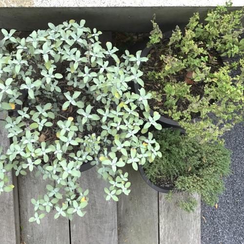 potten als plantenbak met verschillende kruiden in