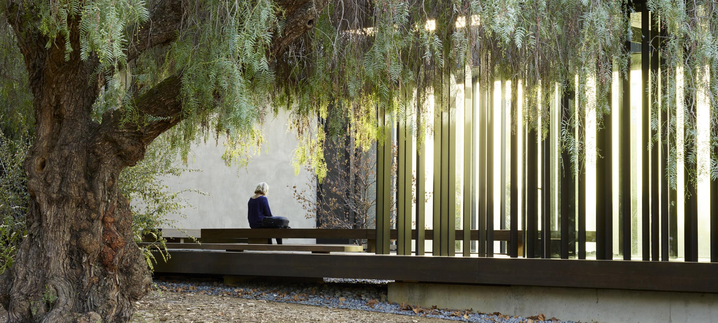 andrea cochran strakke lijnen met boom en mooie lichtinval